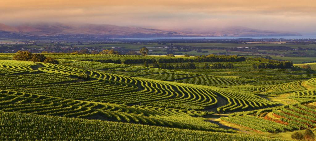 PESA SA Field Trip: McLaren Vale - Geology of Wine 2021
